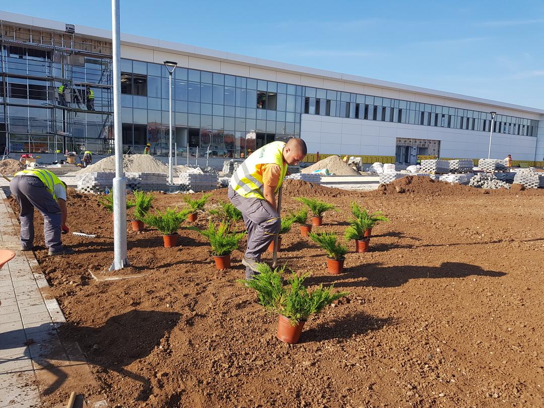 Sadjenje biljaka