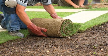 Podizanje travnjaka sadjenjem ili busenovanjem